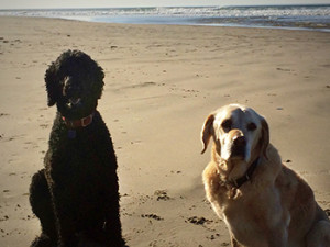 Maureen's Dogs